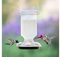 Perky-Pet® Sun-Kissed Top-Fill Glass Hummingbird Feeder - 22 oz Nectar Capacity