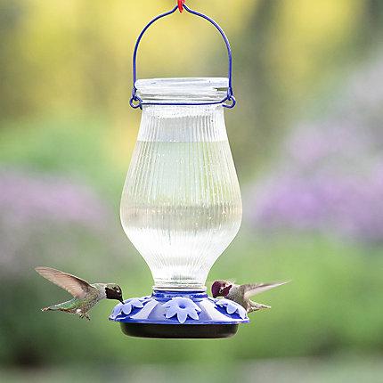 Perky-Pet® Grand Oasis Top-Fill Glass Hummingbird Feeder - 38 oz Nectar  Capacity