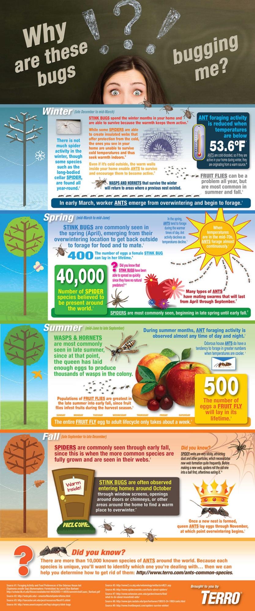 insect seasonality infographic