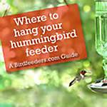 Placing Your Hummingbird Feeder