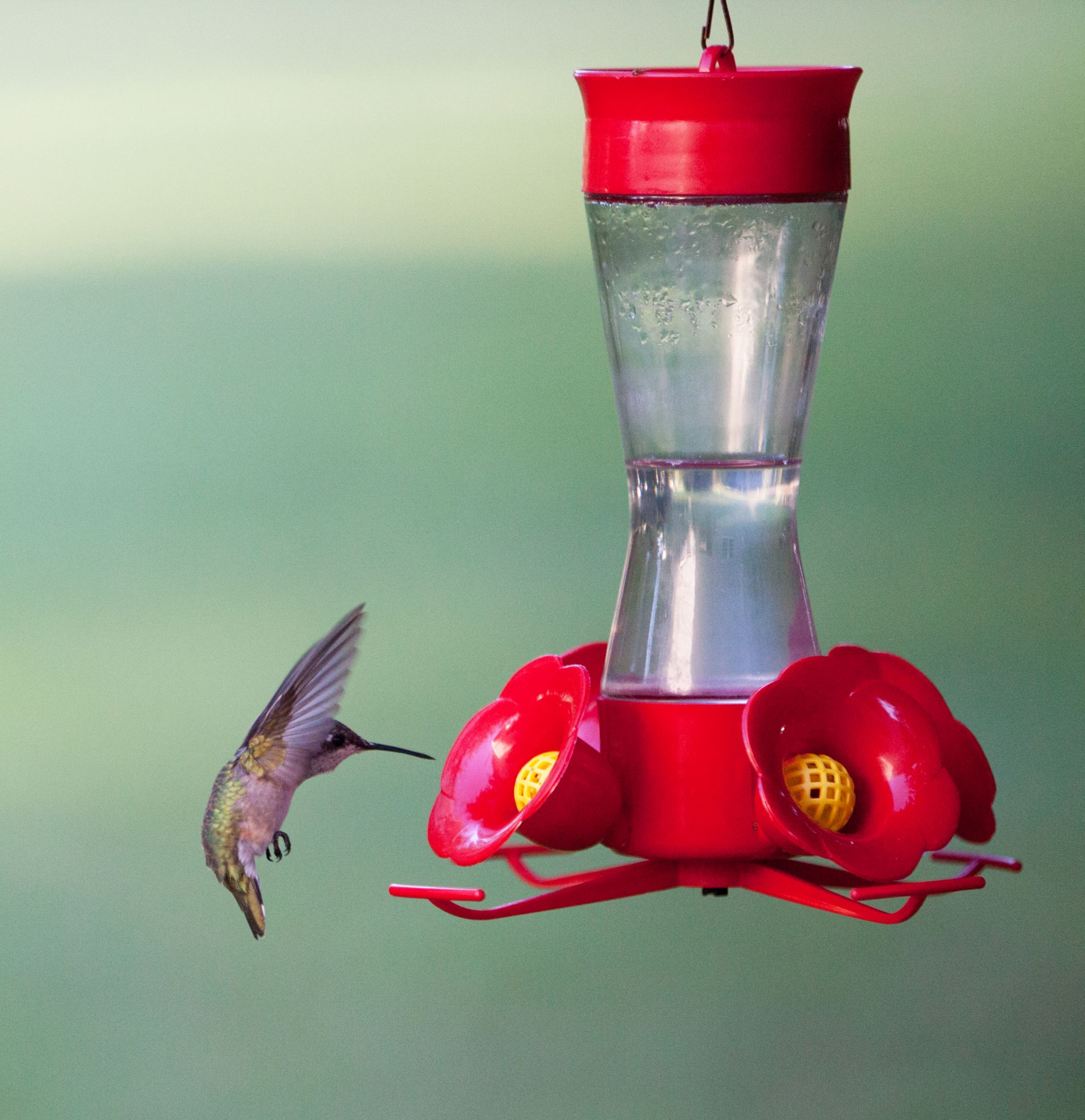 Bee Proof Hummingbird Alimentadores - Hummingbirds Plus