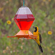 Perky-Pet® Deluxe Oriole Feeder