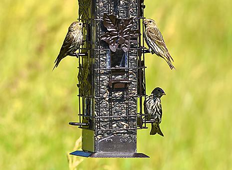 Accommodates Multiple Birds