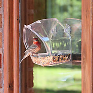 Birdscapes® Window Feeder