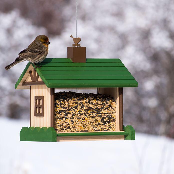 food bird for wild squirrel proof feeders sale feeder