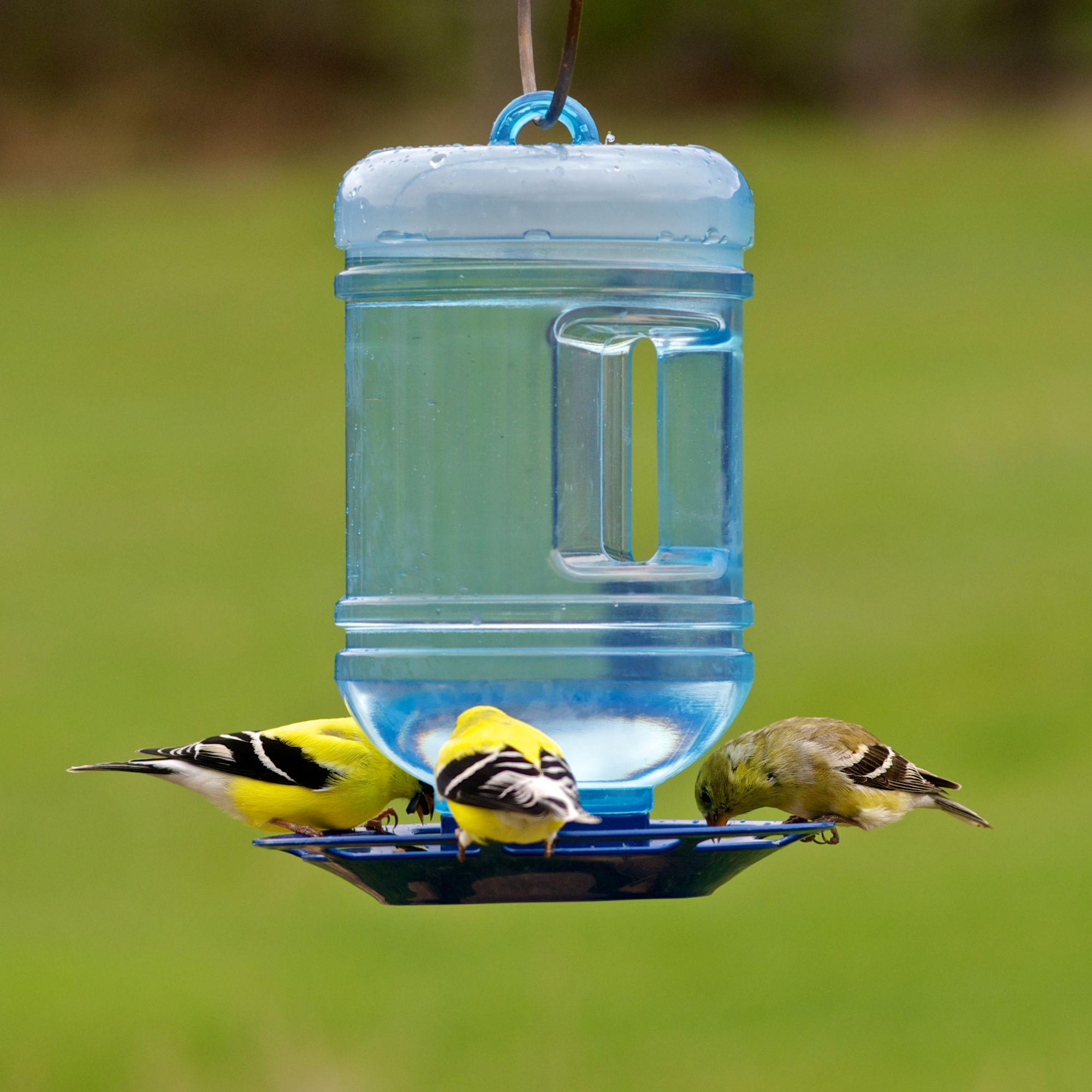 colorful into glass inch and blue company soar house collage feeder metal co inc feeders bird with couronne spring