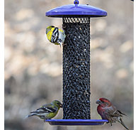 Perky-Pet® Shorty Sunflower Bird Feeder
