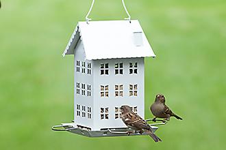 Multiple Birds
