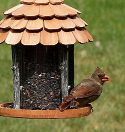 Birdscapes® Gazebo Wood Feeder
