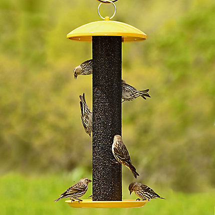 nyjer feeder finch seed kaytee com chewy ac feeders bird sock count dp