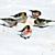Birds feeding in winter