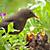 Bird feeding her young