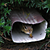 Chipmunk Hiding in drain spout