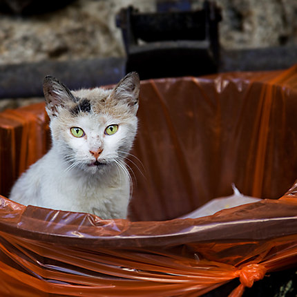 How To Get Rid Of Stray Cats In Your Backyard how to get rid of feral cats | cat removal | havahart® us