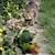 Feral Cat in Garden