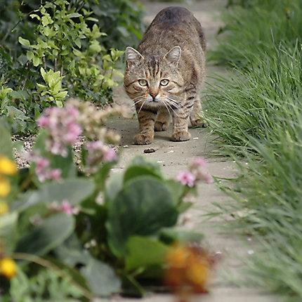 ... Feral Cat in Garden ...