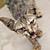 Sick Feral Cat