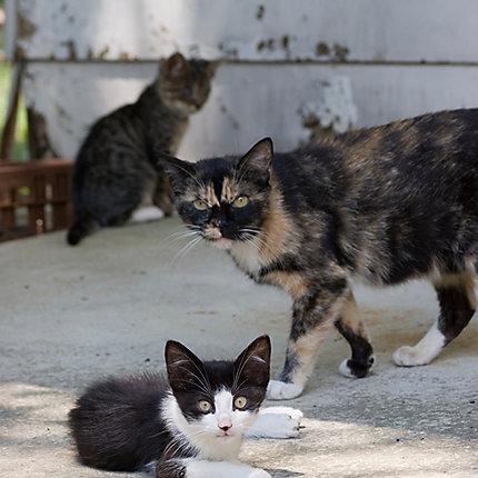 ... Feral Cat & Kittens