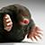 Eating mole