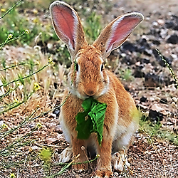 Havahart sells animal traps and animal repellents that work on rabbits -- check out these products on our newly revamped website