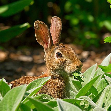Facts About Rabbits | Rabbit Facts | Havahart®