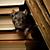 Rat in Books