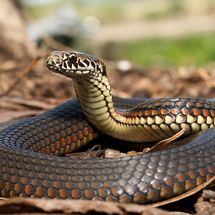 New How to Get Rid Of Snakes In Basement