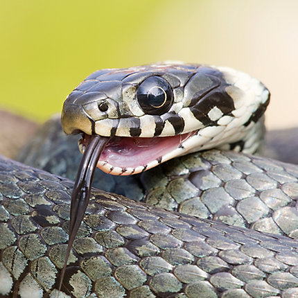 Lovely How to Keep Snakes Out Of Basement