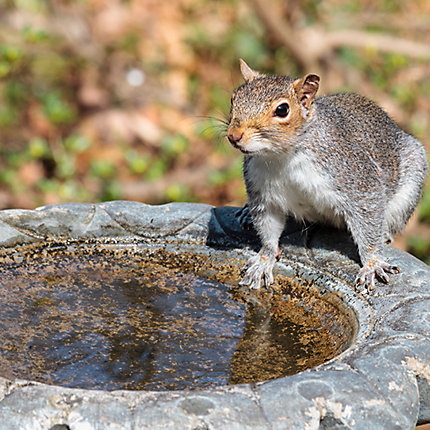 How To Hunt Squirrels In Your Backyard facts about squirrels | squirrel facts | havahart®