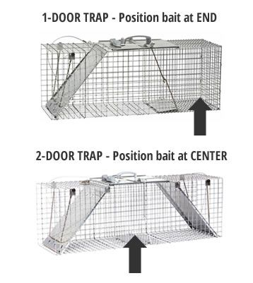 How to Trap Squirrels | Squirrel Trapping | Havahart US