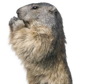 General Groundhog Facts