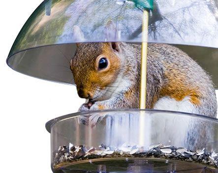 How To Repel Squirrels Squirrel Repellent Havahart
