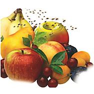 what kills fruit flies fun fruit facts