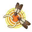 Moth Control