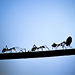 Ant Species Library