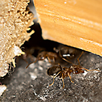 How to eliminate Ants