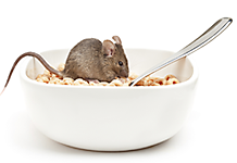 Mouse in Cereal Bowl