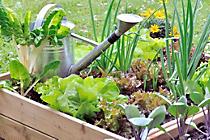 Protect Your Garden