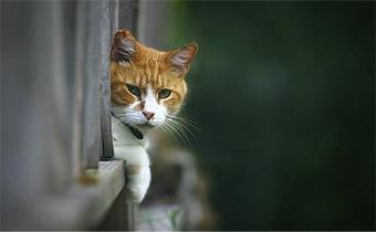 Solution Finder - Outdoor - Living Under Porch