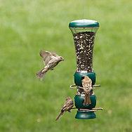 Perky-Pet® Select-A-Bird Tube Bird Feeder - 3.5 lb Seed Capacity