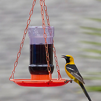 Perky-Pet® Oriole Jelly Feeder - 32 oz Jelly Capacity