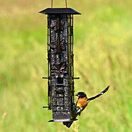 Perky-Pet® Squirrel-Be-Gone® Wild Bird Feeder - 2 lb Seed Capacity