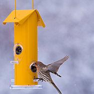 Perky-Pet® Yellow Metal Tube Bird Feeder - 12 oz Seed Capacity