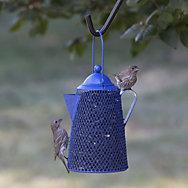 Perky-Pet® Coffee Pot Mesh Bird Feeder - 2 lb Seed Capacity
