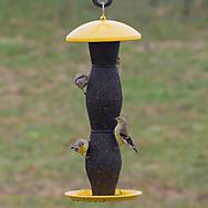 Perky-Pet® Yellow Finch Tube Feeder - 2 lb Seed Capacity