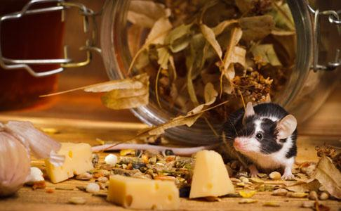 What attracts mice into your home?