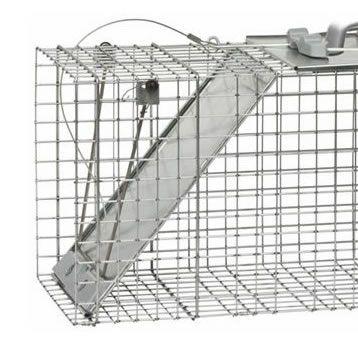 How to Trap Armadillos | Trapping Armadillos | Havahart®