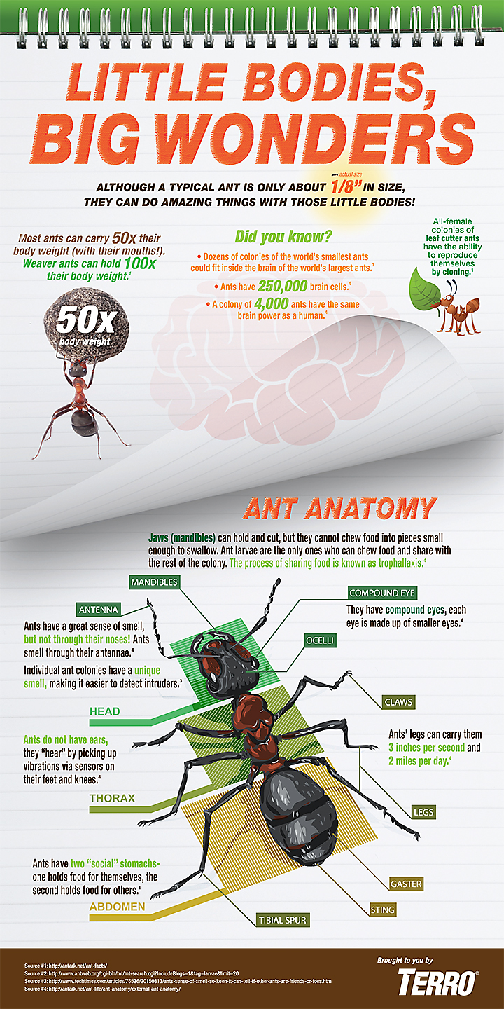 BrilliANT Facts About Ants Infographic
