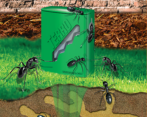 How To Get Rid Of Outdoor Ants Kill The Colony By Baiting