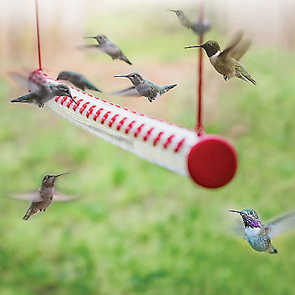 4 Ft Hummerbar 174 Horizontal Hummingbird Feeder Perky Pet 174